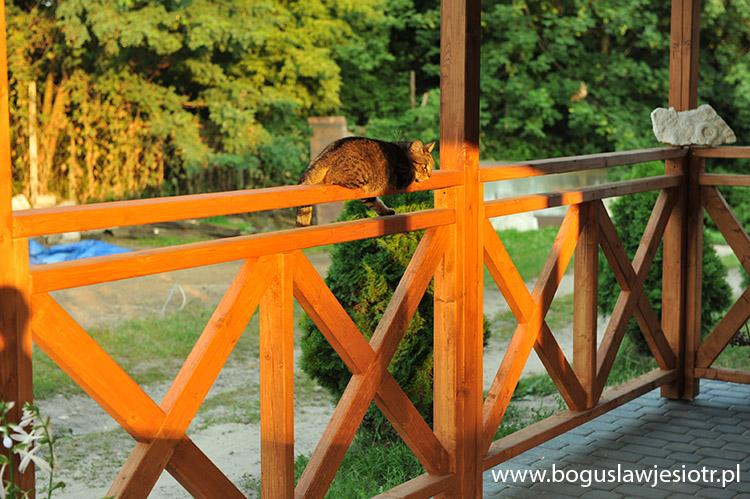 Balustrady Drewniane Na Wymiar Balustrady Balkonowe